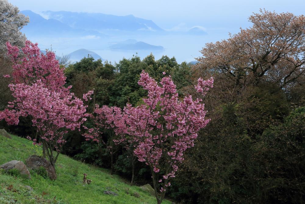 桜の向こう側
