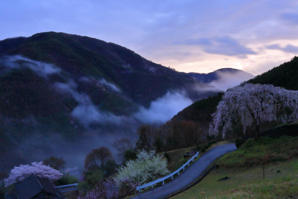 桜色の夜明け