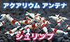 banner_shrimp100x60.jpg