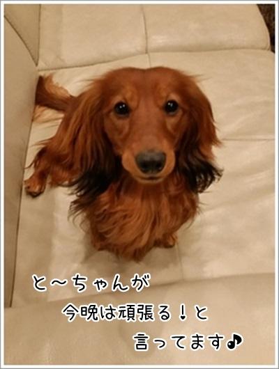 20160318_205019.jpg