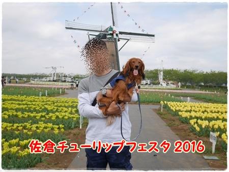 20160429-1.jpg