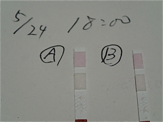 P5240013.jpg