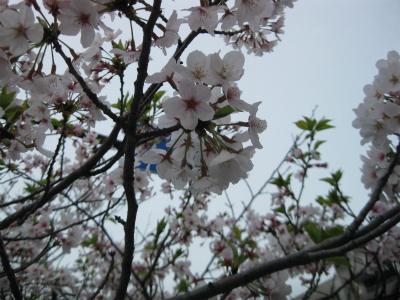 4月10日IMG_8768