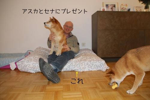 バースデープレゼントは犬ベッド