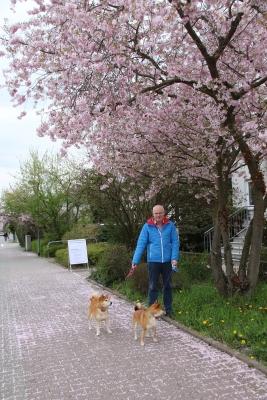sakuraとアドちゃん