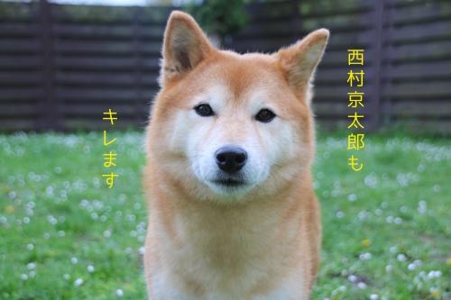 西村京太郎もキレます