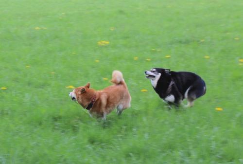 アスカとロザの追いかけっこインニダパーク