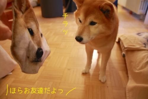 柴犬ハンカチ4