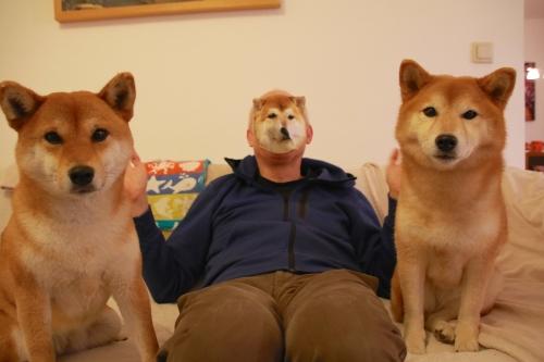 柴犬ハンカチ2
