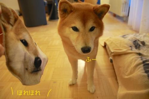 柴犬ハンカチ5