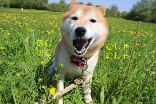 黄色い花とむしゃむしゃあむあむアスカ