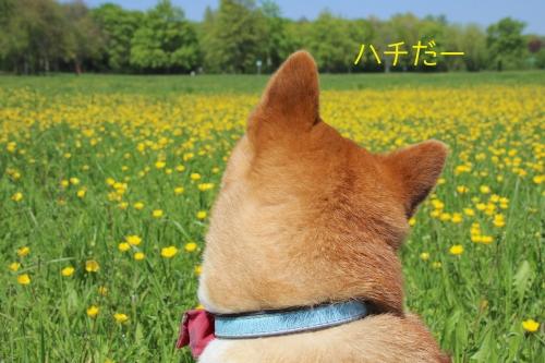 黄色い花とハチ