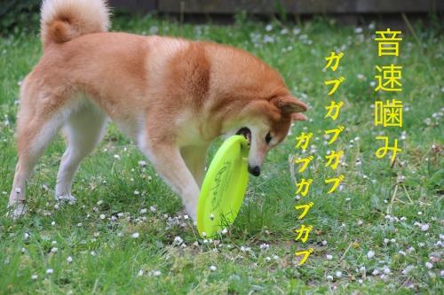 音速噛みガブガブガブ