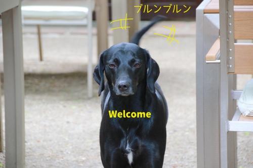 森のレストランの犬
