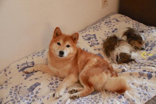 フミとアスカが添い寝