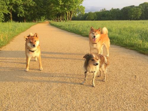 朝散歩でびちょびちょの3匹