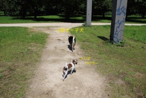 小型犬=子犬