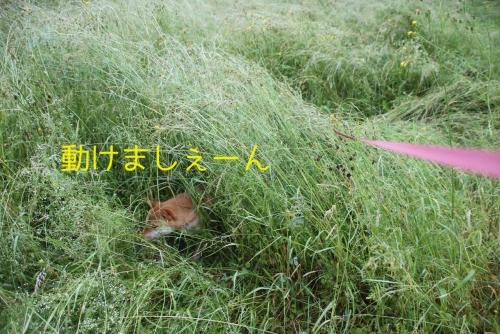 草に隠れて2