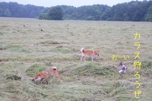 草刈り後の恒例行事1