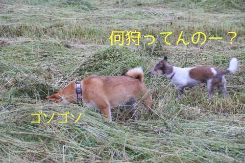 草刈り後の恒例行事フミオ氏ゼロ