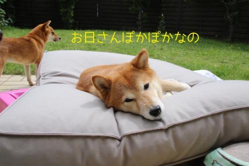 日干し中のアスカとベッド