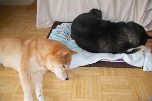 ロザと添い寝するアスカが可愛い2