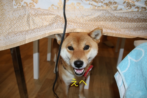 机の下のセナ