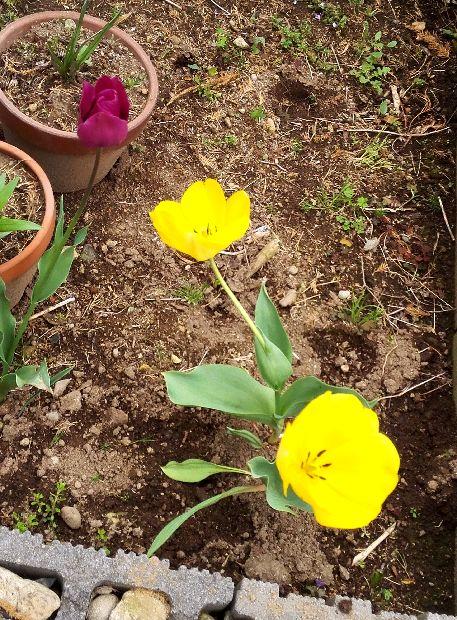 我が家の庭3