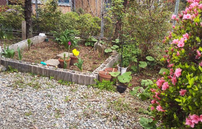 我が家の庭2
