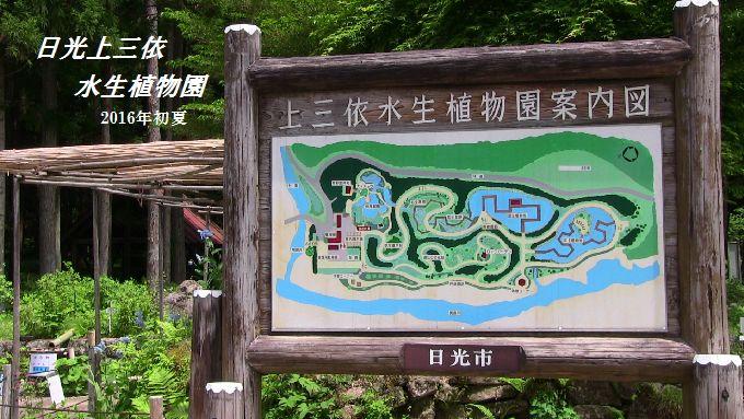 水生植物園表題
