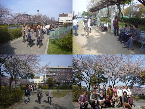 桜を見に行ったのですが…