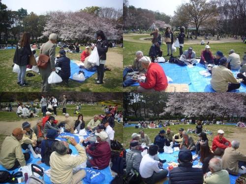 名城公園へお花見に!