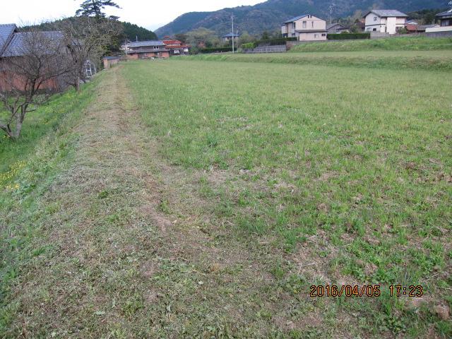 畦端の草刈り1