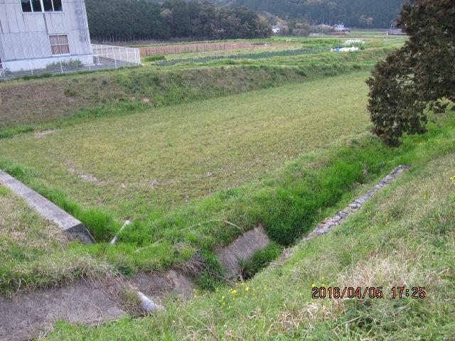草刈り前の圃場