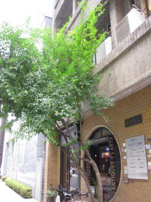 奥野ビル1階アンティークショップ