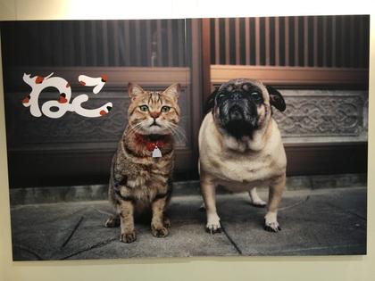 岩合さんの写真展3
