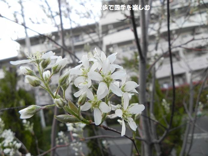 jyu-nberi-36.jpg