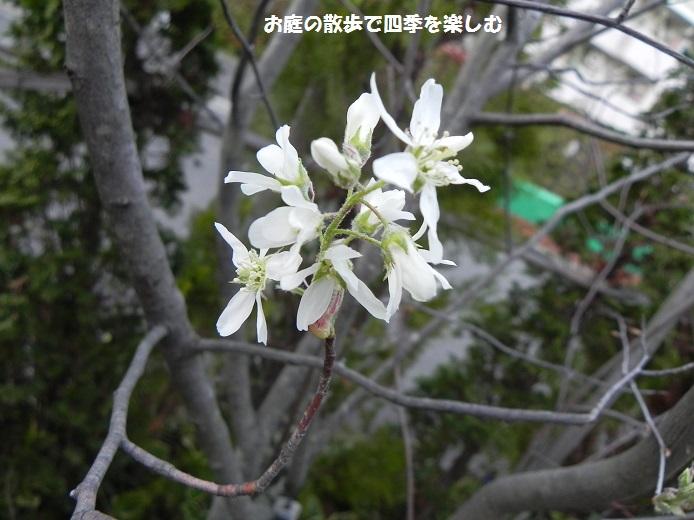jyu-nberi-38.jpg