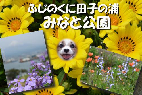 みなと公園の花