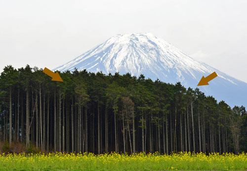 途中の景色菜の花と富士山