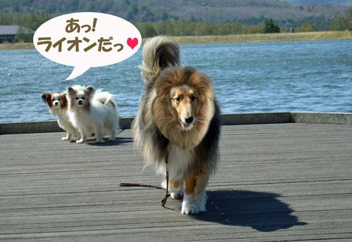 ライオンマリンちゃん