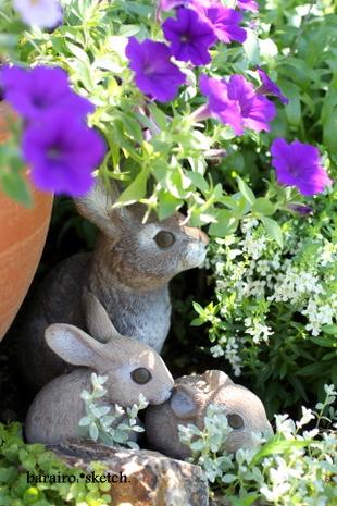 ウサギさん11