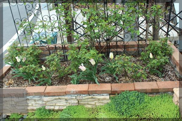 チューリップ 砕石駐車場花壇 20160410