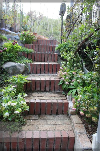 階段 庭の花 クリスマスローズ 20160406