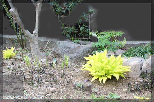 裏 庭の花 20160406