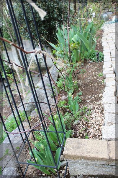 庭の花 20160406 東