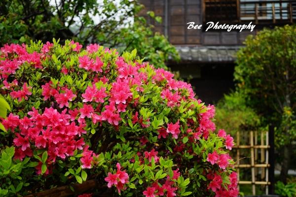 bee-高尾駒木野庭園3498