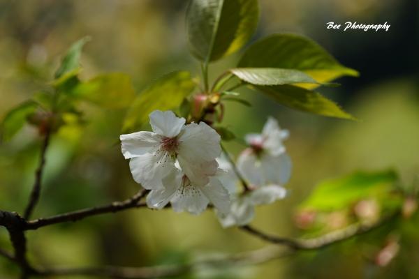 bee-高尾森林科学園2237-太白