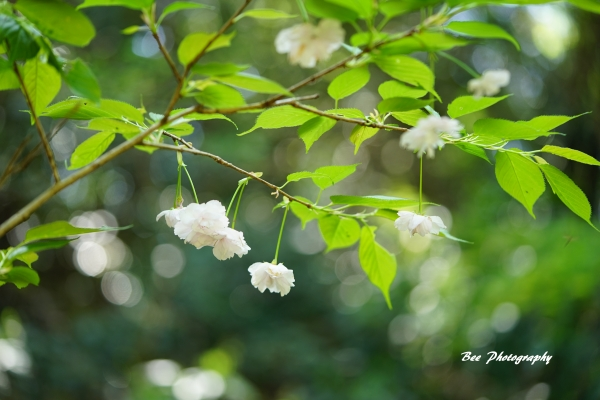 bee-高尾森林科学園2333