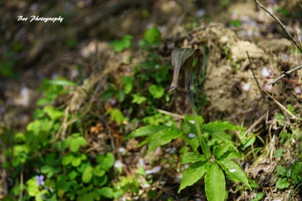 bee-森林科学園ーミミガタナンテンショウ2223